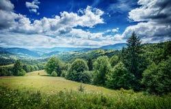 Arbres sur la montagne Carpathien, l'Europe photographie stock