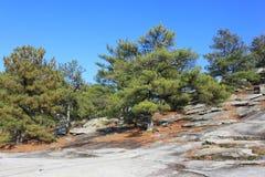Arbres sur la montagne en pierre en Géorgie. Photographie stock libre de droits
