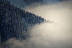 Arbres sur la montagne neigeuse Photos libres de droits