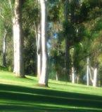 Arbres sur la pelouse herbeuse Images libres de droits