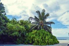 Arbres sur la plage en Maldives Image stock