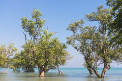 Arbres sur la plage est de Railay images libres de droits