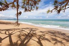 Arbres sur la plage tropicale dans la saison d'été, le ciel bleu d'espace libre et le tro Photo libre de droits