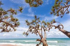 Arbres sur la plage tropicale dans la saison d'été, le ciel bleu d'espace libre et le tro Image stock