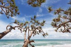Arbres sur la plage tropicale dans la saison d'été, le ciel bleu d'espace libre et le tro Photos libres de droits