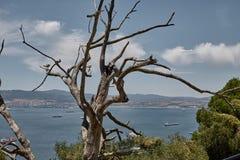 Arbres sur le dessus de la roche du Gibraltar photos libres de droits