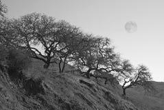 Arbres sur le flanc de coteau avec la pleine lune Photos stock