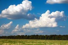 Arbres sur le fond du ciel bleu avec des nuages Photos stock