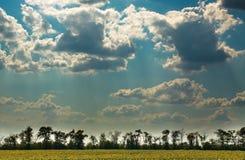Arbres sur le fond du ciel bleu avec des nuages Photo libre de droits