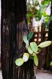 Arbres sur le jardin dans le backgroung vert en bois Photos libres de droits