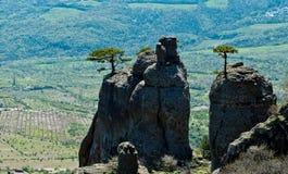 Arbres sur les roches Photo libre de droits