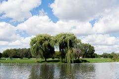 Arbres sur un lac Photo libre de droits