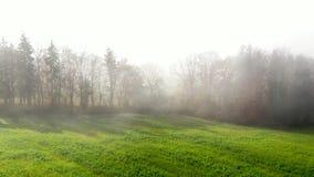 Arbres sur un pré en brume de matin clips vidéos