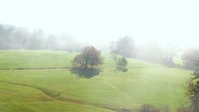 Arbres sur un pré en brume de matin banque de vidéos