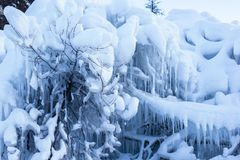 Arbres surchargés avec la neige Photo libre de droits