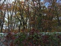 Arbres tôt d'automne, barrière en métal, érable Photographie stock