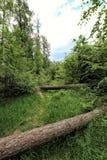 Arbres tombés à travers le chemin forestier image stock