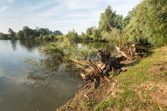 Arbres tombés au bord d'un étang naturel Photographie stock libre de droits