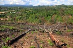 Arbres tombés en raison de la notation et du déboisement illégaux pour l'agriculture dans la forêt tropicale de la Thaïlande photos libres de droits