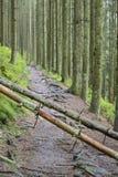 Arbres tombés sur la traînée, Ardennes, Belgique Photos libres de droits