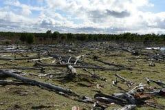 Arbres tombés sur le rivage de Lago Blanco Photo libre de droits