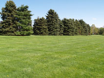 Arbres toujours d'actualité par une pelouse verte Photos stock