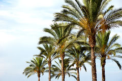 Arbres tropicaux Photo stock