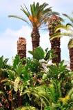 Arbres tropicaux Image stock