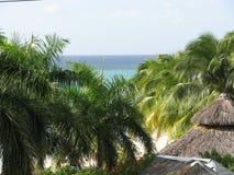 Arbres tropicaux avec l'océan Photographie stock libre de droits