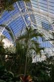 Arbres tropicaux dans le conservatoire Photographie stock libre de droits