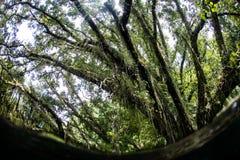 Arbres tropicaux et Epiphytes en Solomon Islands Images libres de droits