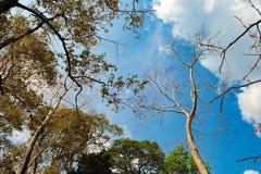 Arbres tropicaux grands et ciel bleu de la vue inférieure photos stock