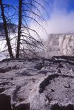Arbres tués par Yellowstone Hot Springs Images stock