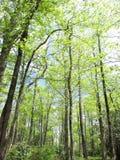 Arbres verts Image libre de droits