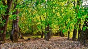 Arbres verts Photos libres de droits