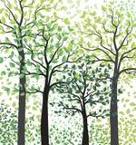 Arbres verts avec des feuilles Image libre de droits