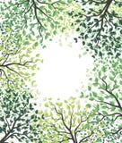 Arbres verts avec des feuilles Photographie stock libre de droits
