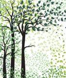 Arbres verts avec des feuilles Photos libres de droits