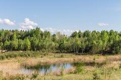Arbres verts, chardons d'herbe sèche, terrain marécageux Photographie stock libre de droits
