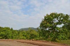 Arbres verts, ciel bleu, nuages blancs et Vindya Hil Photo stock