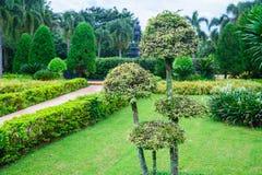 Arbres verts dans le jardin Photos libres de droits