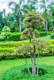 Arbres verts dans le jardin Images stock
