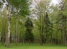 Arbres verts dans une forêt Photo libre de droits