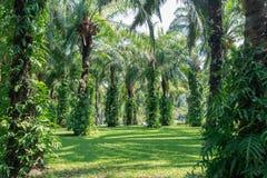 arbres verts de stationnement Image stock