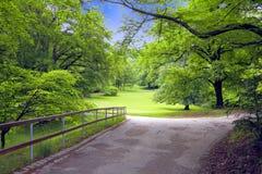 Arbres verts en stationnement Image libre de droits