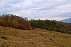 Arbres verts et jaunes en automne photographie stock