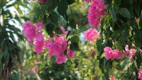 Arbres verts et rose de fleurs contre le ciel bleu et la jungle brillante du soleil Vue à l'arrière-plan tropical de fleurs de fo banque de vidéos