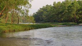 Arbres verts par la rivière Photos libres de droits