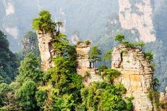 Arbres verts s'élevant sur des dessus des piliers naturels de grès de quartz photographie stock libre de droits