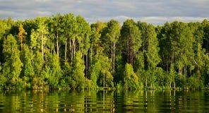 Arbres verts sur la rive avec la réflexion et les vagues photos libres de droits